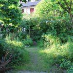 Begroeide tuin.