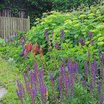 Tuin met verschillende soorten beplanting.