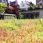 Begroeid dak in een stedelijke omgeving.