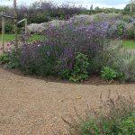 Tuin met waterpassende verharding in de vorm van grind.