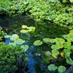Regenwatervijver met waterminnende planten.