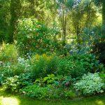 Tuin met veel verschillende soorten beplanting, bomen en grassen.
