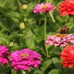 Waardeplanten voor vlinders.